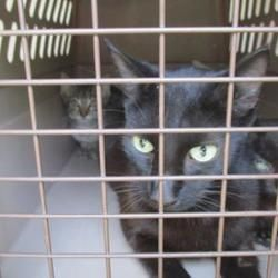Available pets at Citrus County Animal Services in Inverness, Florida #petadoption
