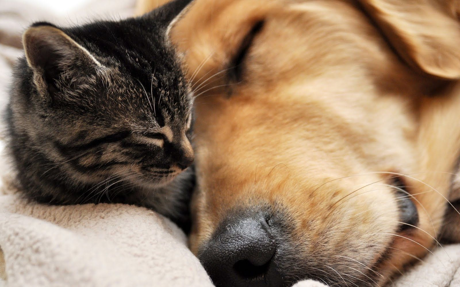Wallpapers Hd Cat And Dog Images Dogs Cats Wallpaper