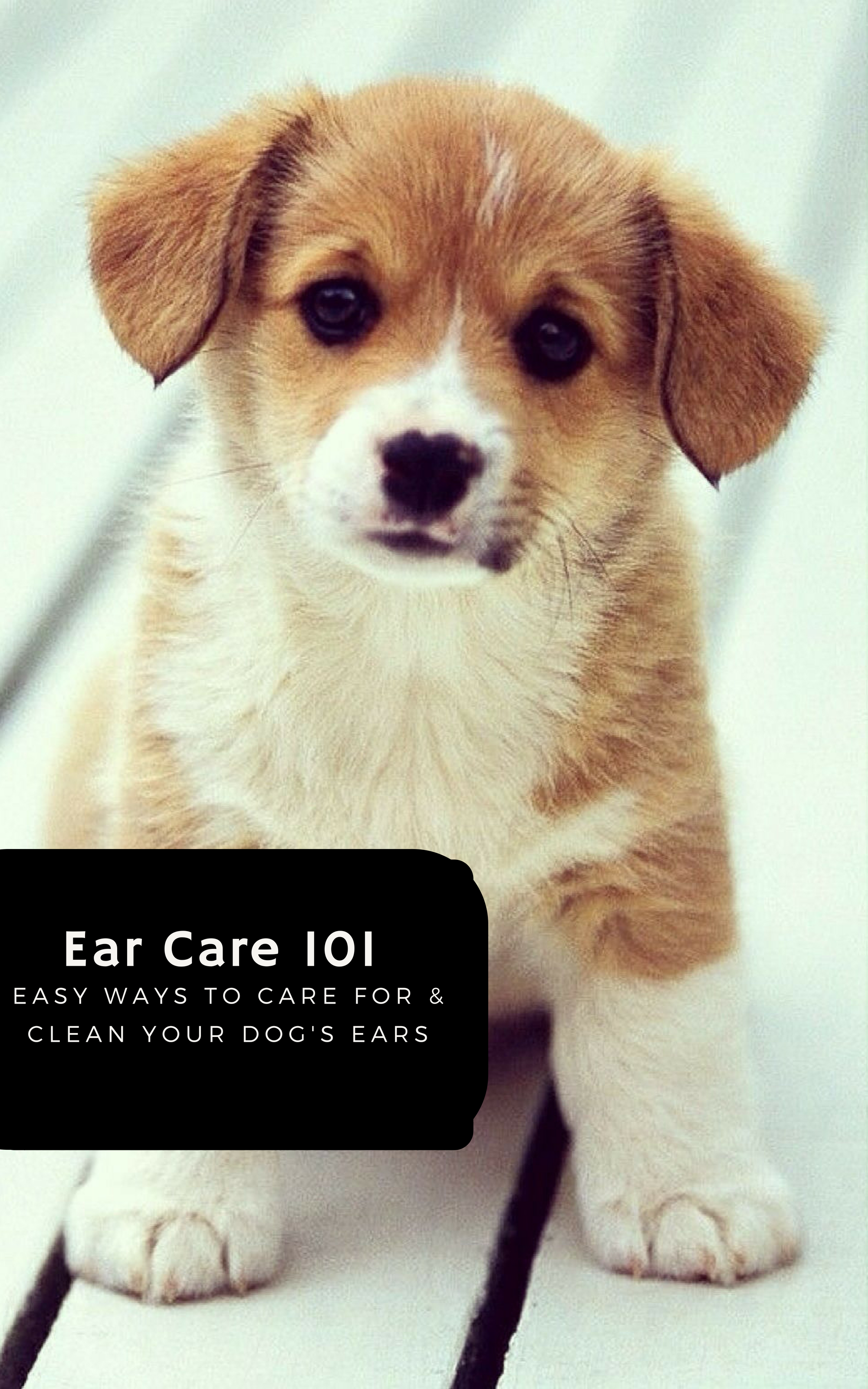 Http Crateandboxreview Com Index Php 2018 06 22 Pet Subscription Box Blog Cleaning Your Dogs Ears Dog Advice Sick Dog Dog Care