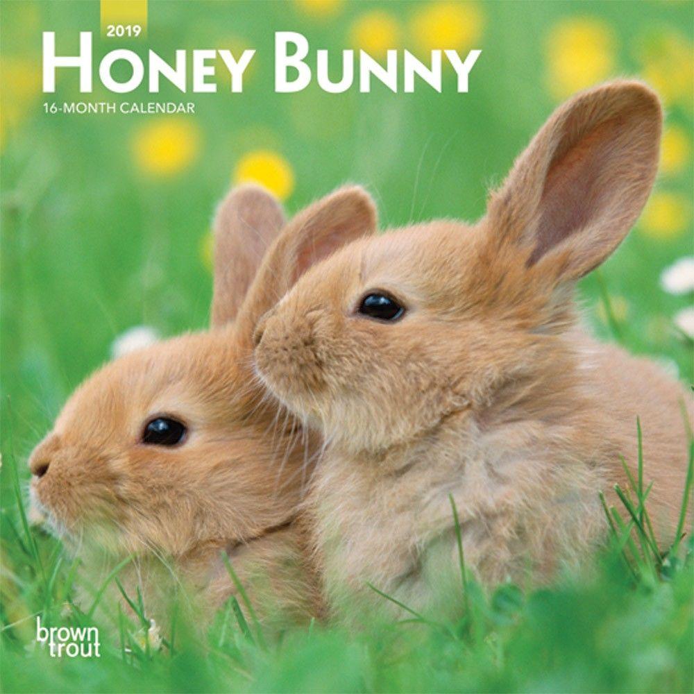 Honey Bunny 2019 7 X 7 Inch Monthly Mini Wall Calendar Domestic Small Cute Animals Isbn 978 1 9754 0035 4 Animals Small Pets Bunny