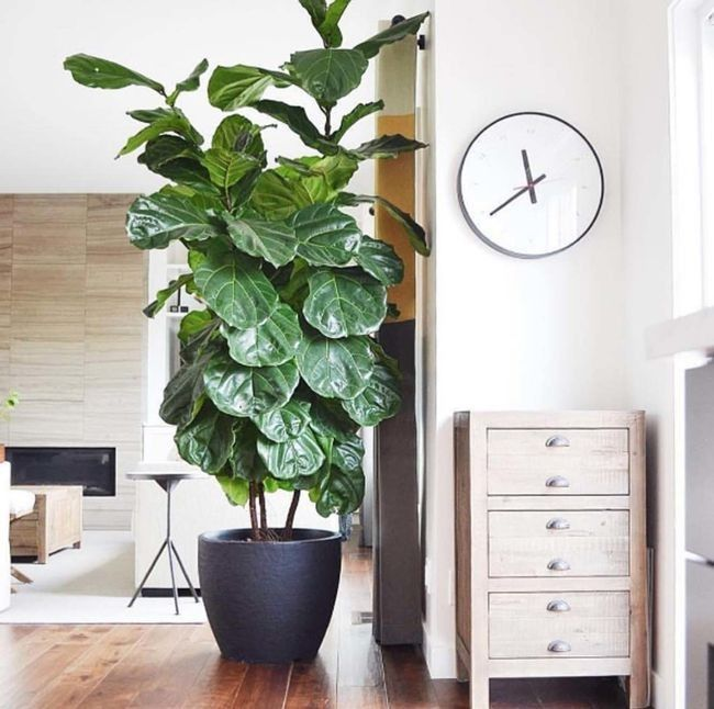 Fresh Indoor Plants Decoration Ideas For Interior Home: 23 Images That Show How To Style Indoor Plants
