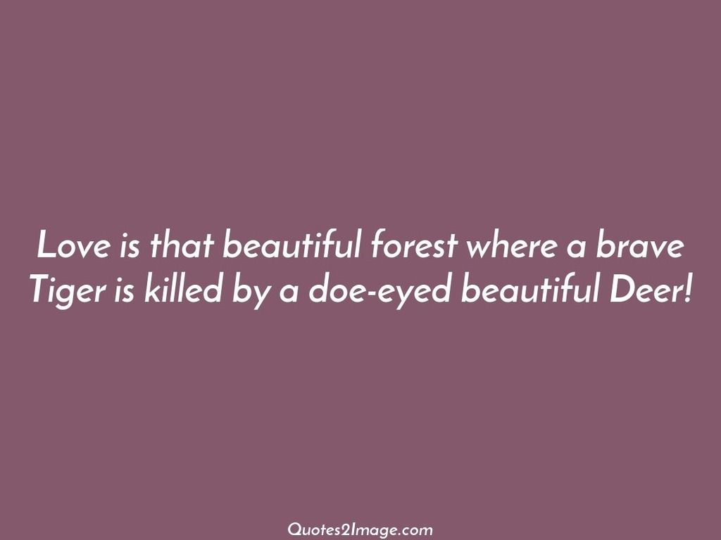Love is that beautiful forest where a brave Tiger is killed by a doe-eyed beautiful Deer!