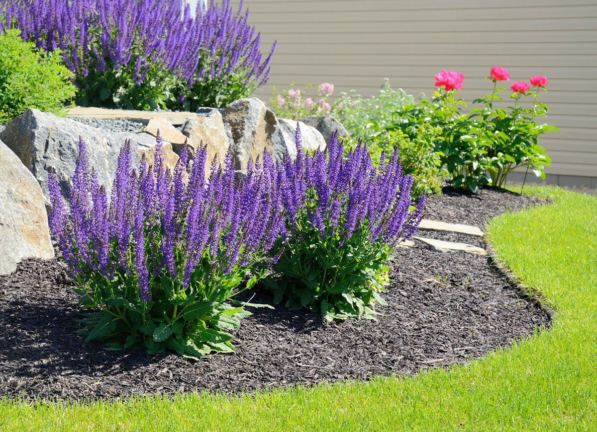 Do These 8 Things And Never Pay For Plants Again Easy Landscaping Landscaping With Rocks Front Yard Landscaping Design