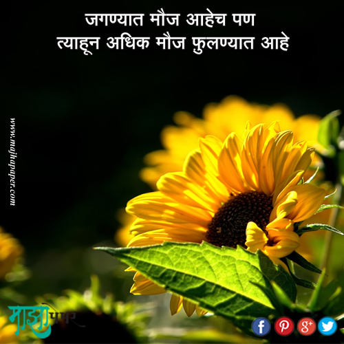 Meaning full quote 2 Sunflower, Yellow flower wallpaper