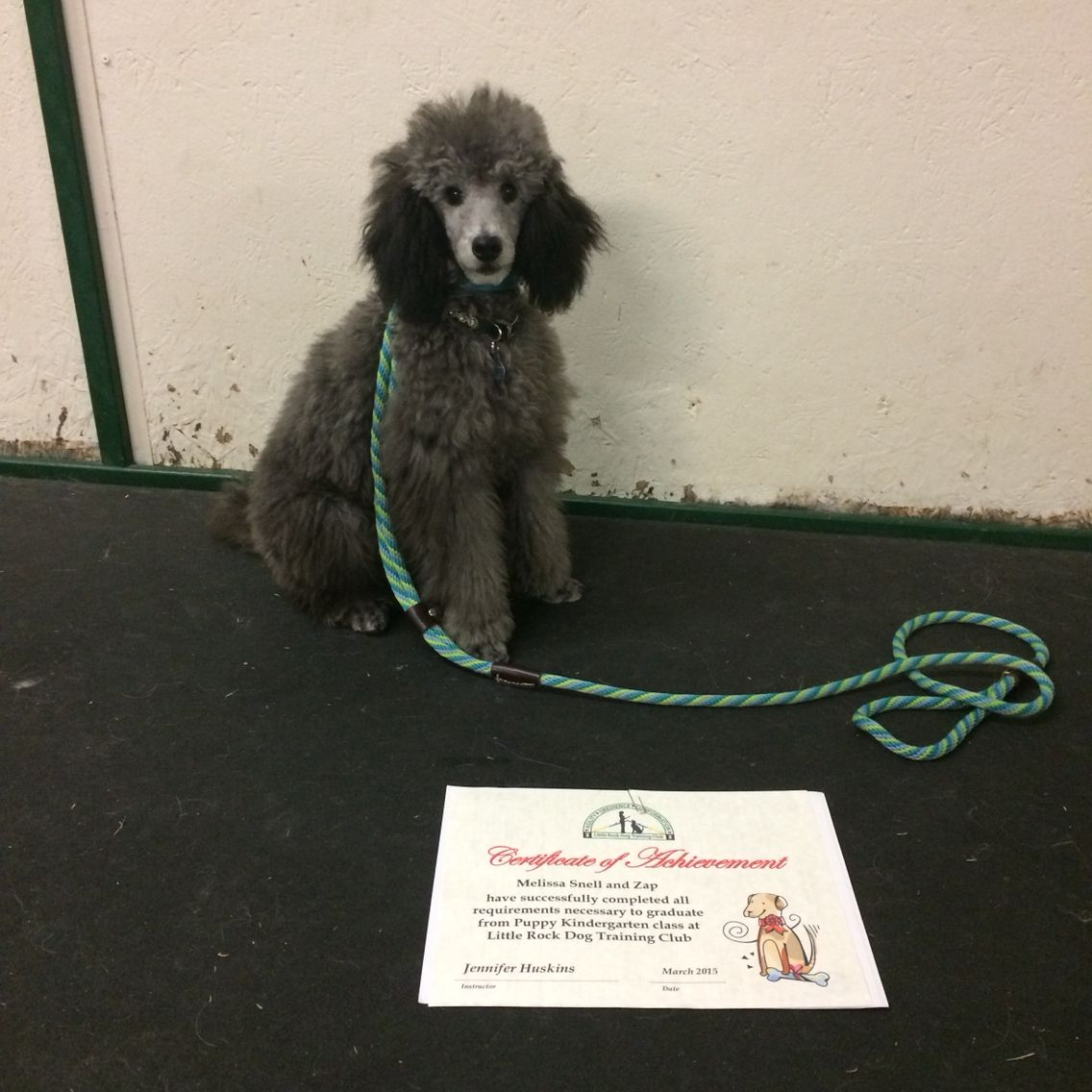 Zap graduating from first puppy class. (With images
