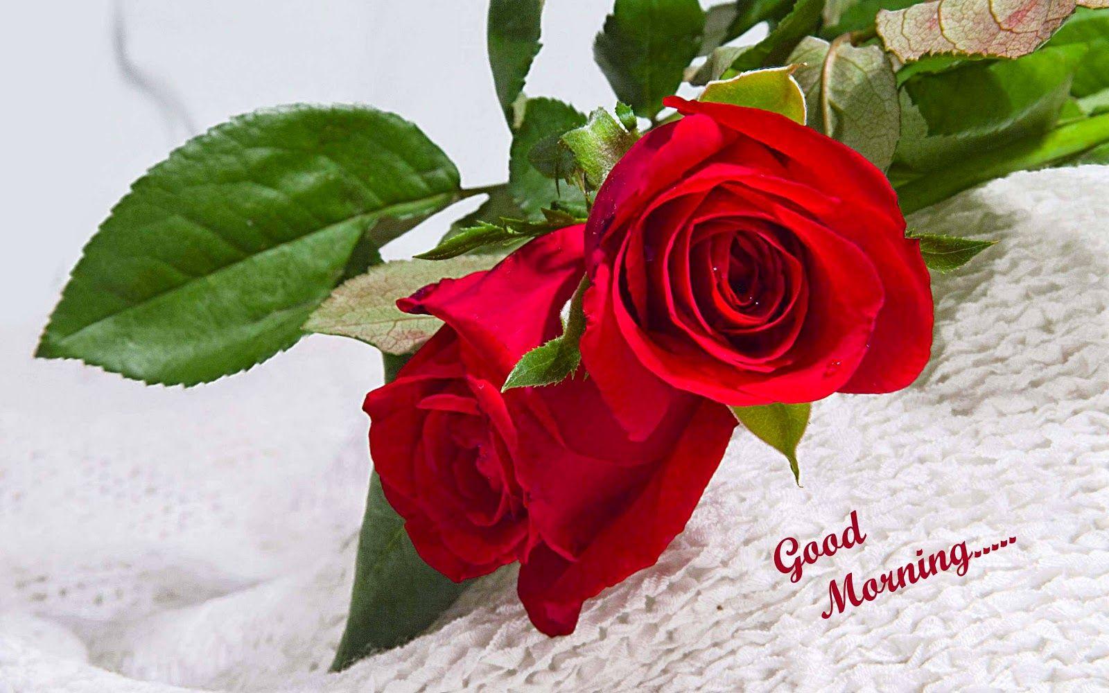Good Morning Image With Love 2015 Good Morning Image With Love Couple Good Morning Image With Shayari Rose Flower Wallpaper Good Morning Roses Morning Flowers