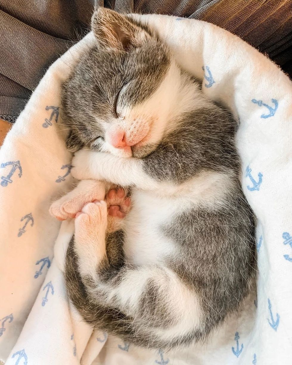 Pin By Dea S Designs On Mis Pines Guardados In 2020 Cute Baby Animals Kittens Cutest Cute Cats