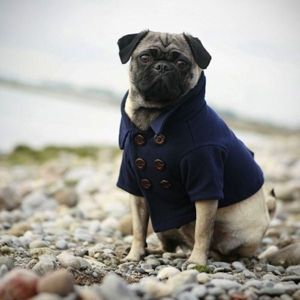The 30 Most Important Dogs Of 2010 Pugs Cute Pugs Dog Milk