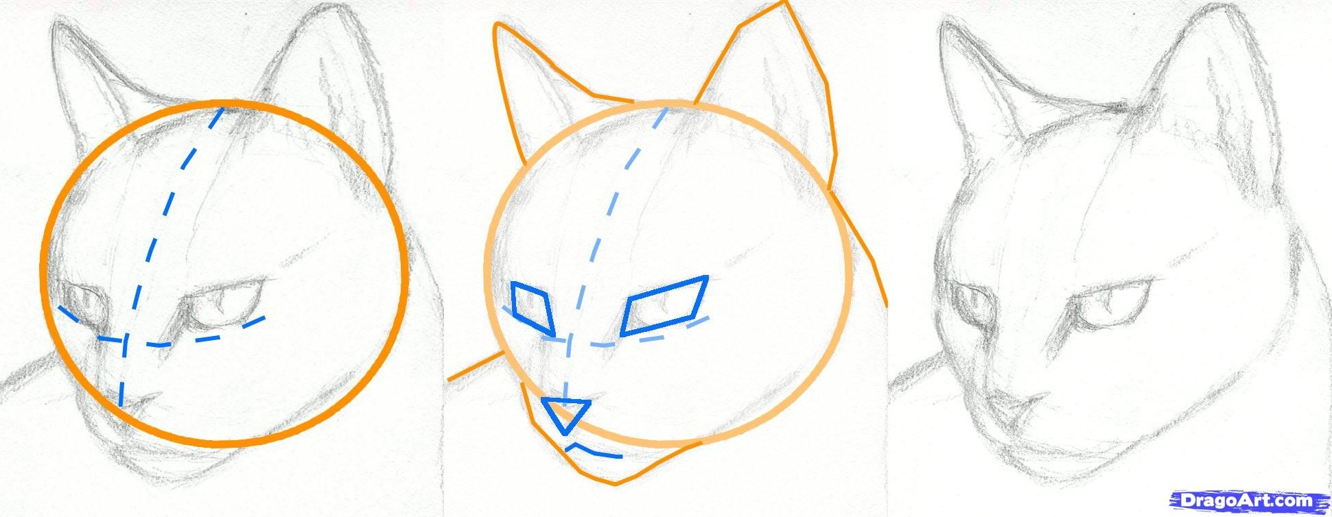 How To Draw A Cat Face Step By Step How To Draw A Cat Head Draw A