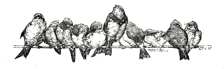 Antique Clip Art | Vintage Bird Clip Art Illustration