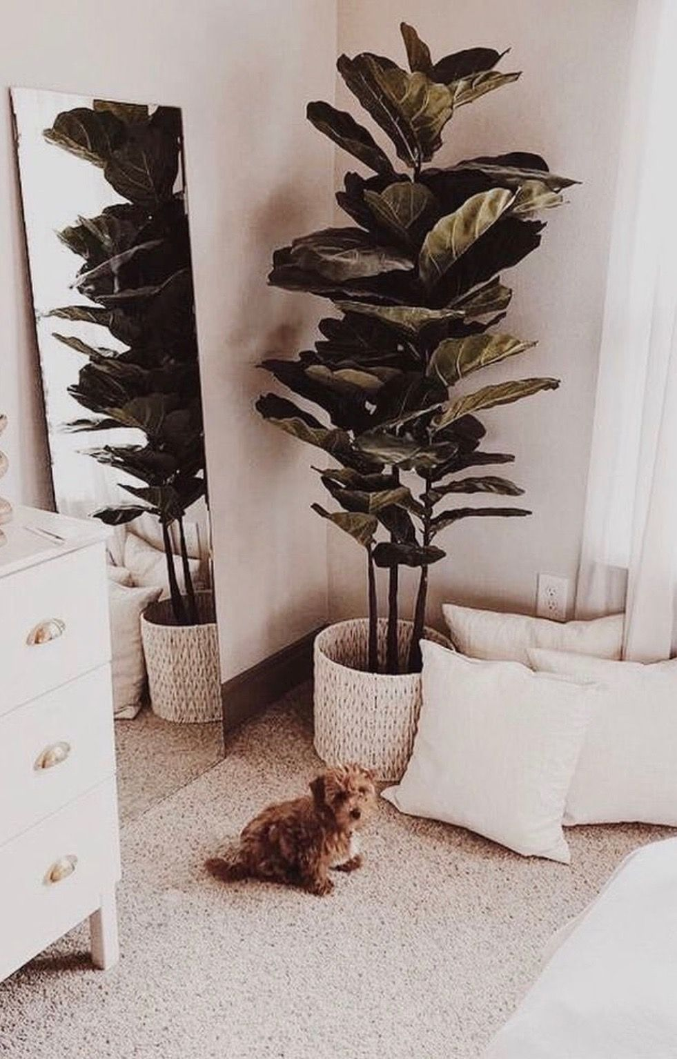 this plant for our empty corner in living room living on sweet dreams for your home plants decoration precautions and options id=83901