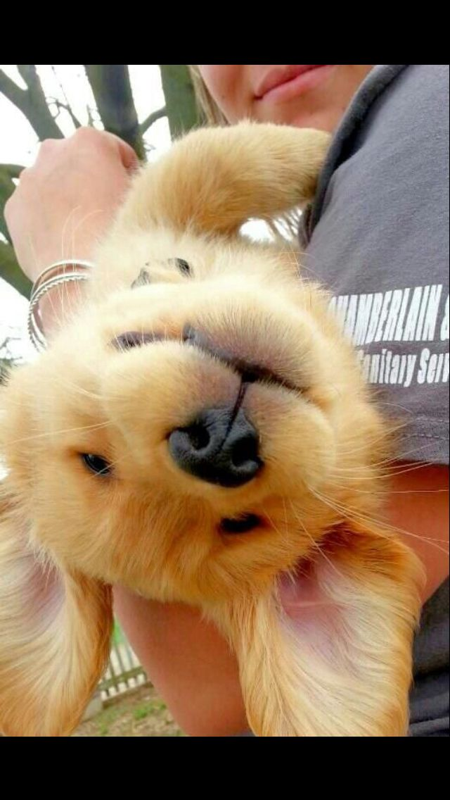 Happy place! Awwww Cute animals, Cute dogs, Baby dogs