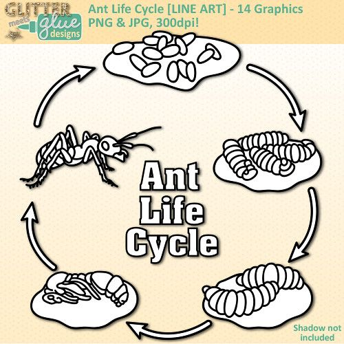 Ant Life Cycle Clip Art Line Art Biology Life Science Lesson Plan Ideas Science Ant Life Cycle Life Science Lesson Plans Life Science Lessons
