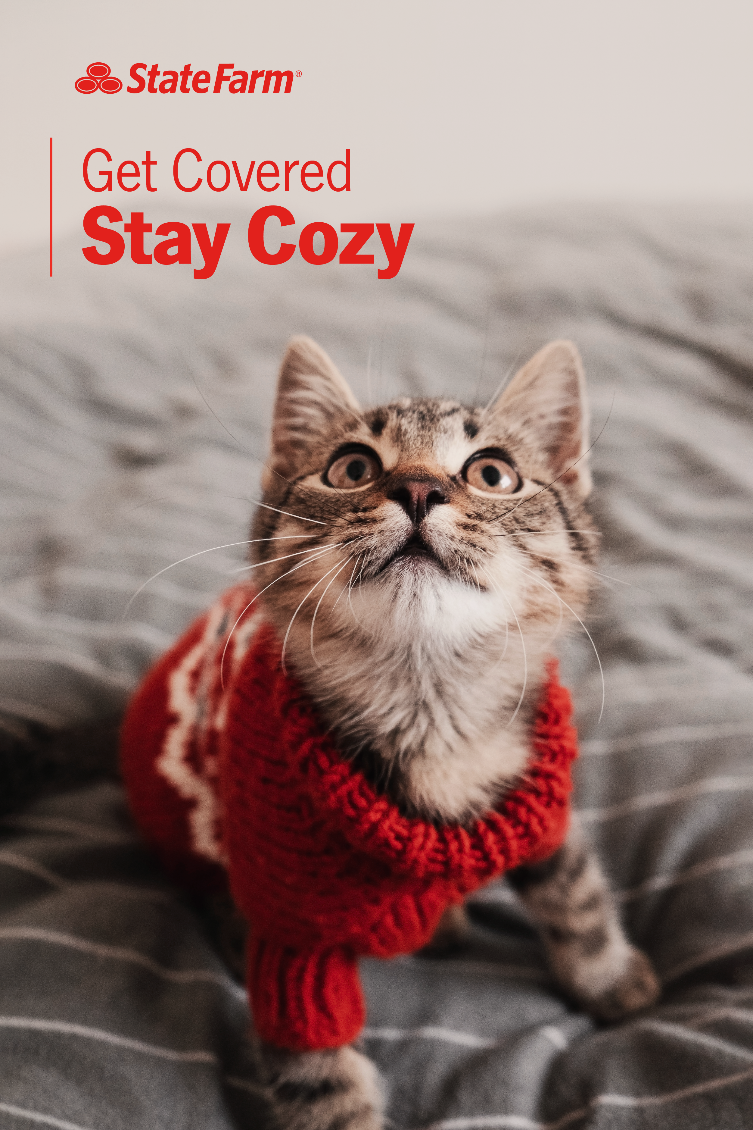 Get Covered Stay Cozy Pets State Farm Feline Leukemia