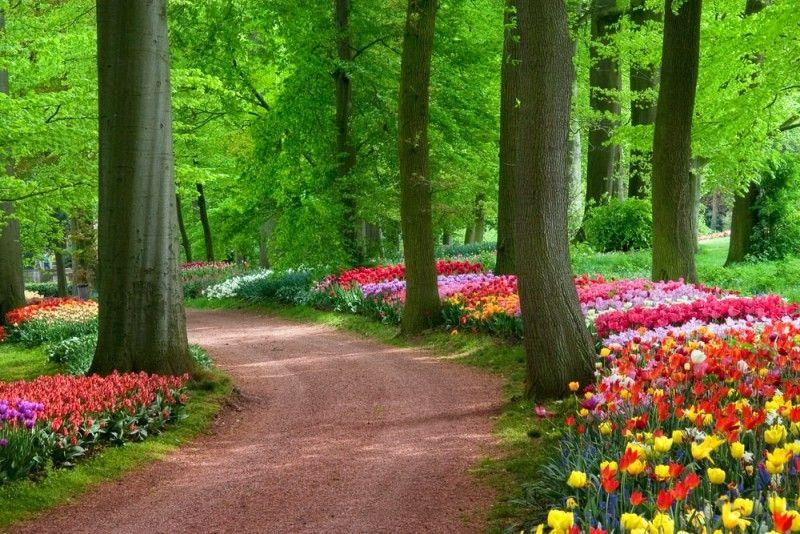 Home Flower Gardens And Flower Landscape Pictures Landscape Pictures Nature Desktop Nature Desktop Wallpaper