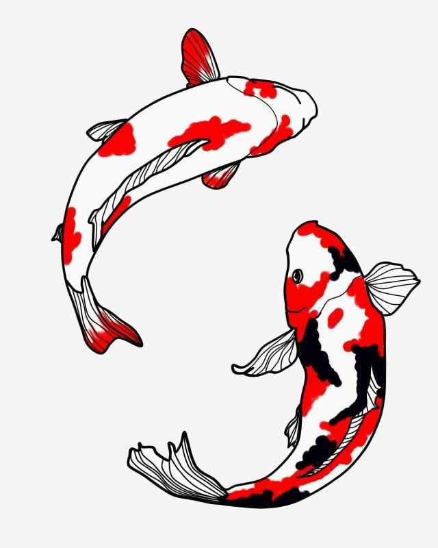 red and black koi,koi,fish,carp,hand drawn illustration,antiquity,two koi,illustration,red koi,fish clipart