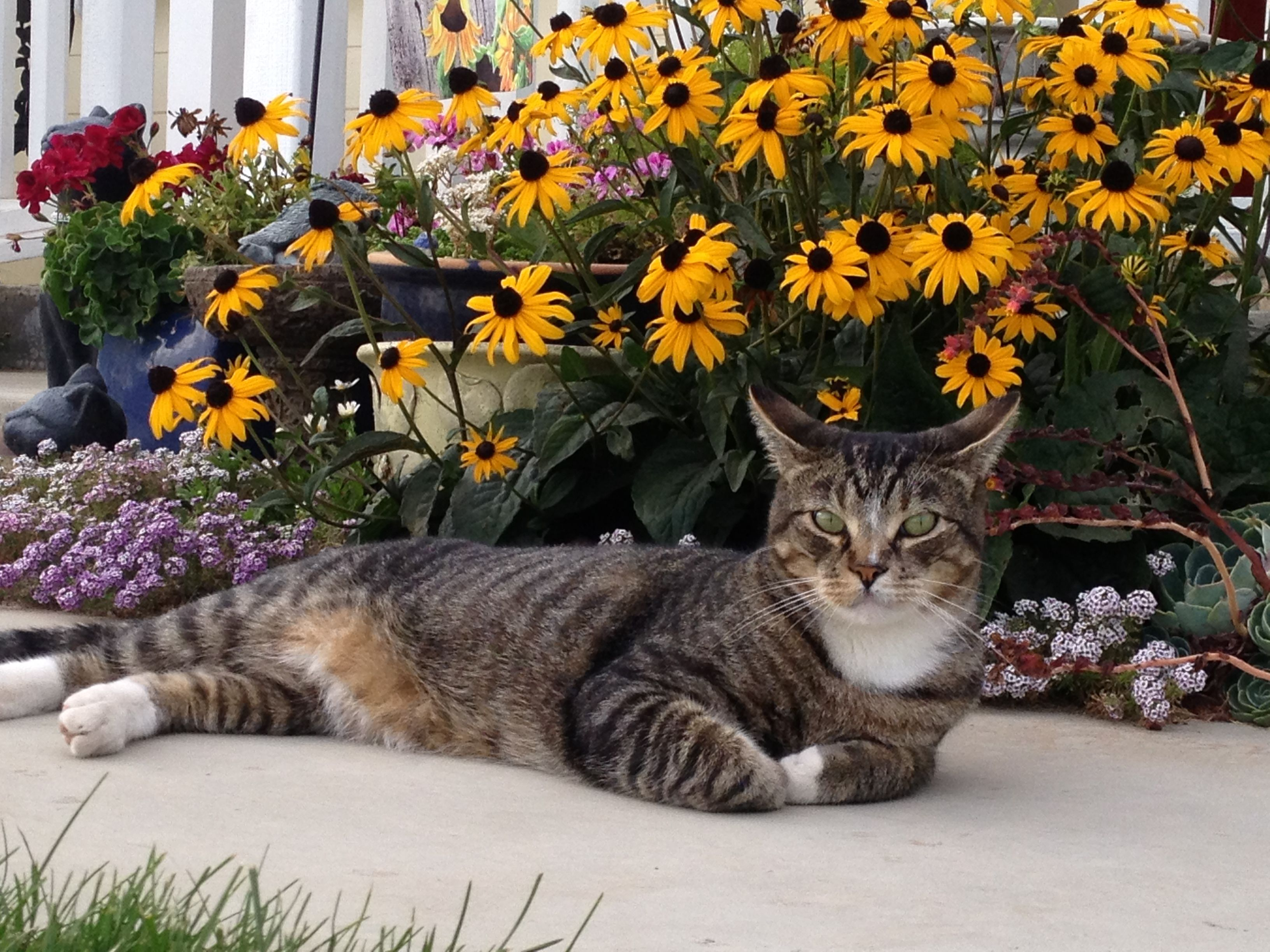 """My cat """"Boots"""" in the garden."""