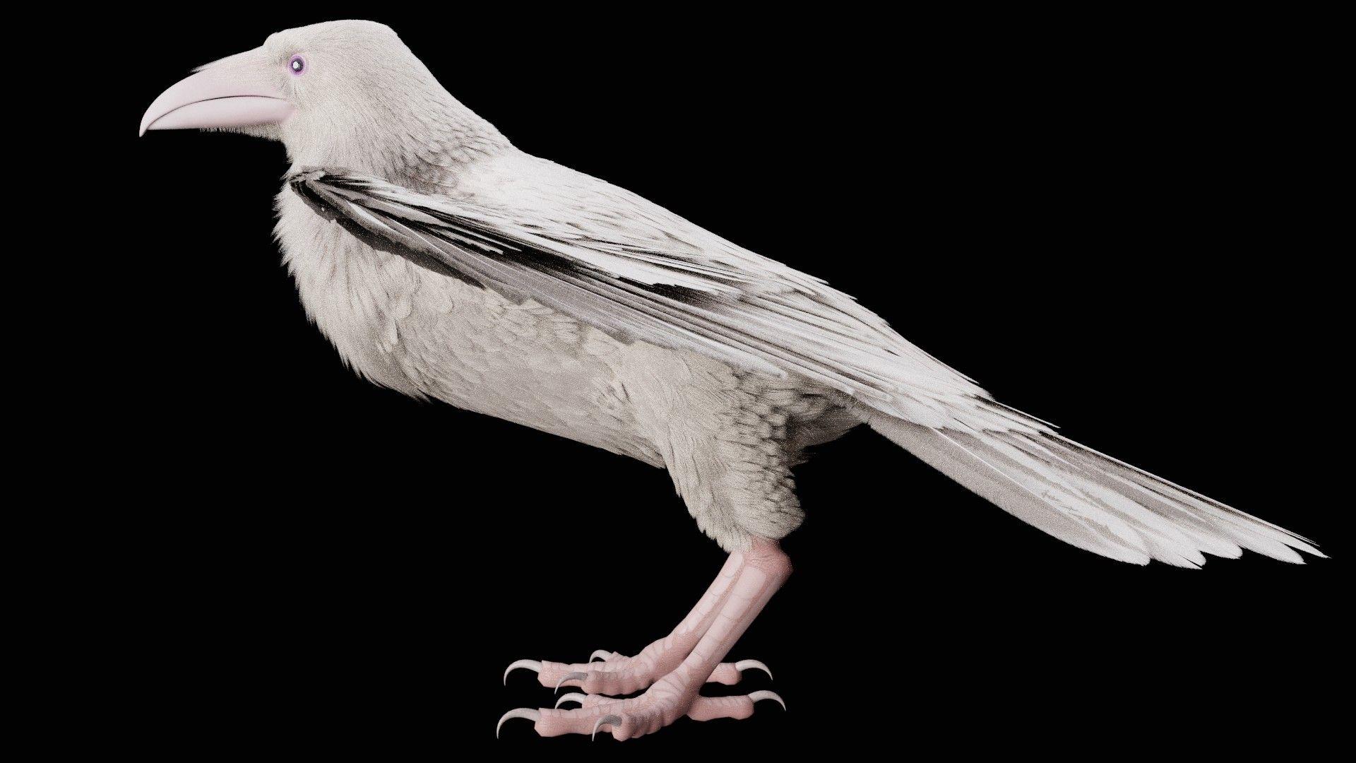 редкая белая ворона фото