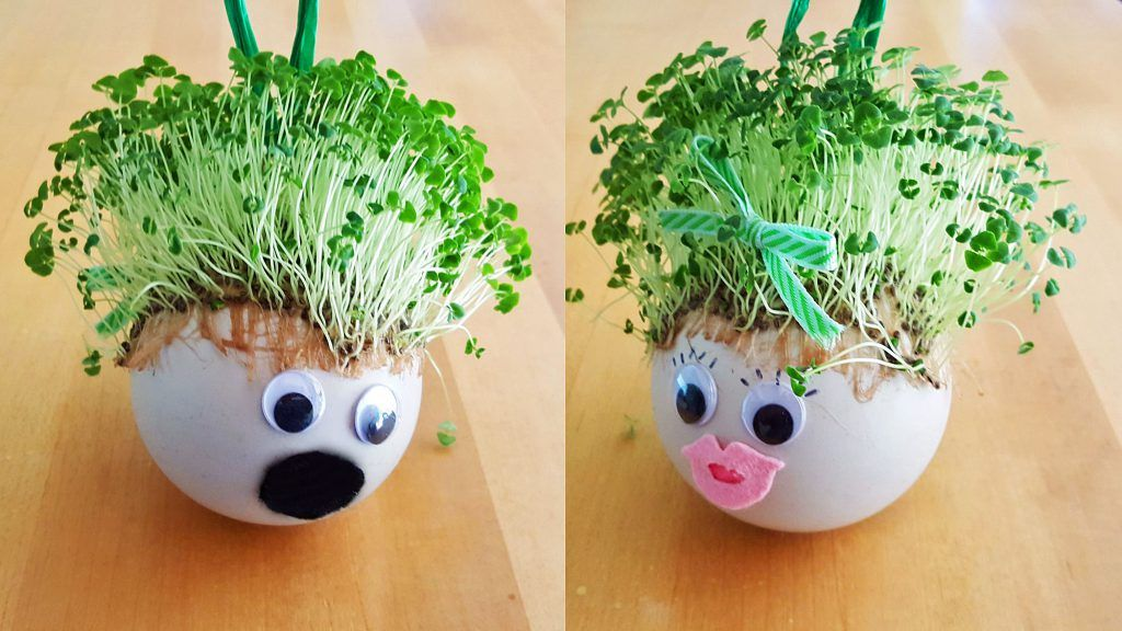 Grow Your Own Chia Pet A One Of A Kind Diy Ornament Chia Pet Chia Pet Seeds Pet Ornaments Diy