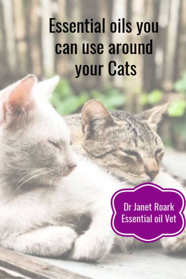 What essential oils do I for cats? My website