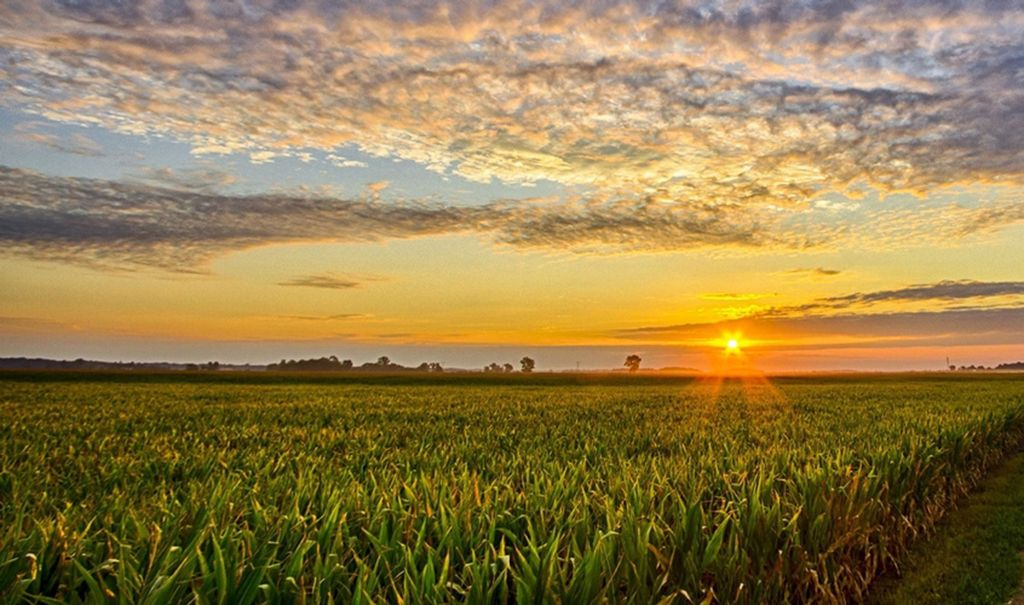 New research addresses gap between research and practice in sustainable agriculture