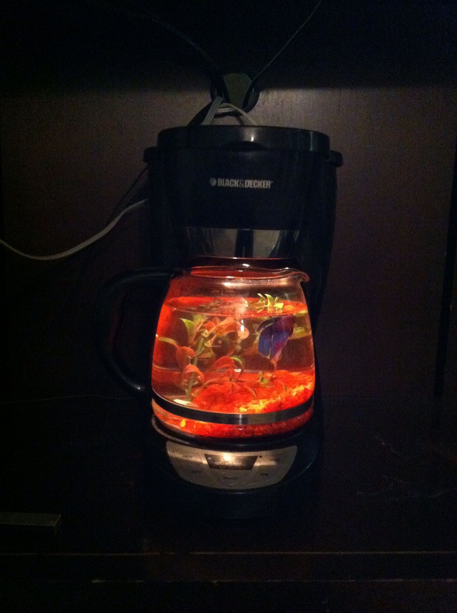Coffee pot fish tank Put the light where the filter goes I used an