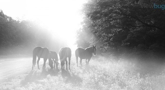 Beautiful Horses by PrysyazhnyyOleksiy - 800 Horses Photo Contest