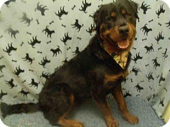 Upper Marlboro Md Rottweiler Mix Meet Max A Dog For Adoption