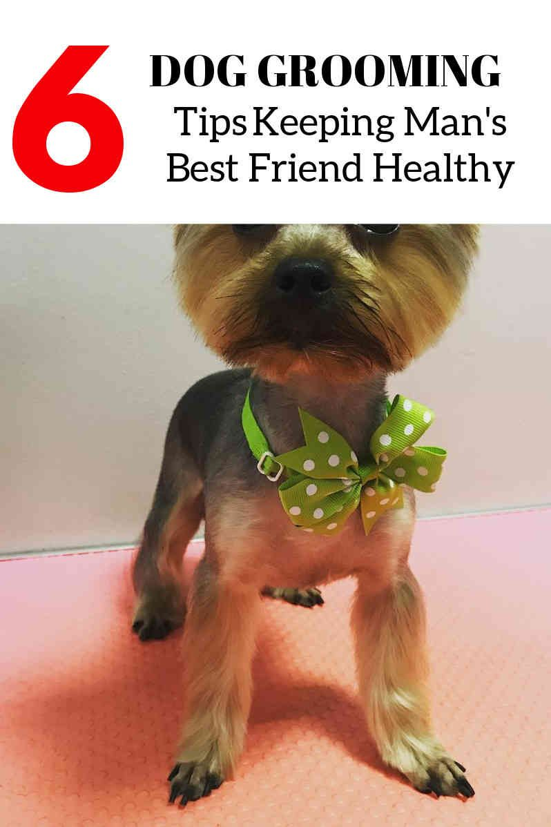 Five Dog Grooming Tips And Tricks Dog Grooming Dog Grooming Supplies Dog Grooming Tips