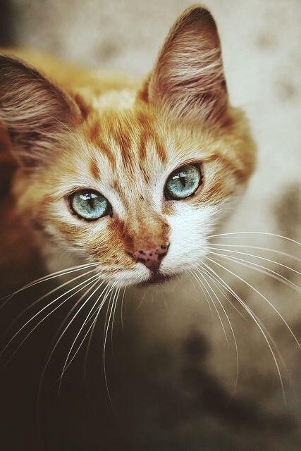 Epingle Par Norah Malaysia Sur Animals Chats Adorables Beaux Chats Chat Mignon