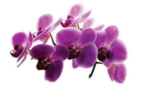 Orchidee bloemen vallen af