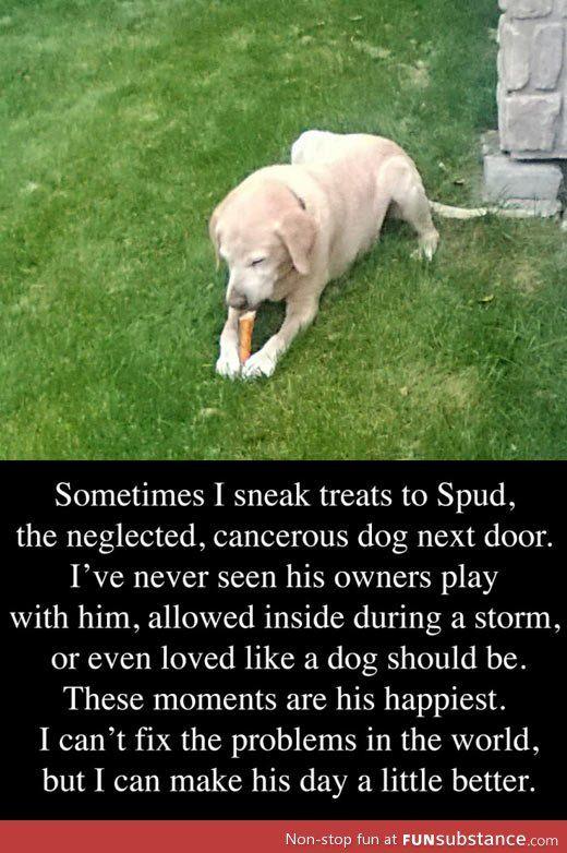 The neglected dog next door