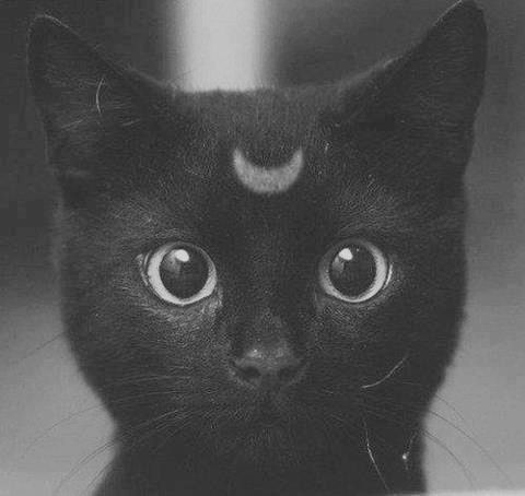 bohemian waif.. moon beam... one day I will have another black cat and call it moonbeam, it will have a little moon mark on its head.