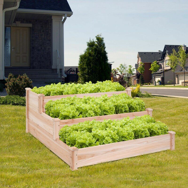 Jeffrey Vegetable Garden 3 Tier 4 Ft X 4 Ft Cedar Wood Vertical Garden Garden Beds Vegetable Garden Wood Planters
