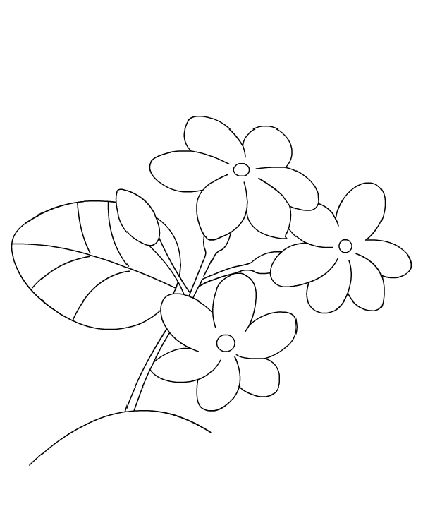 Jasmine Flower Coloring Pages New Coloring Pages Flower Coloring Pages Printable Flower Coloring Pages Flower Drawing For Kids