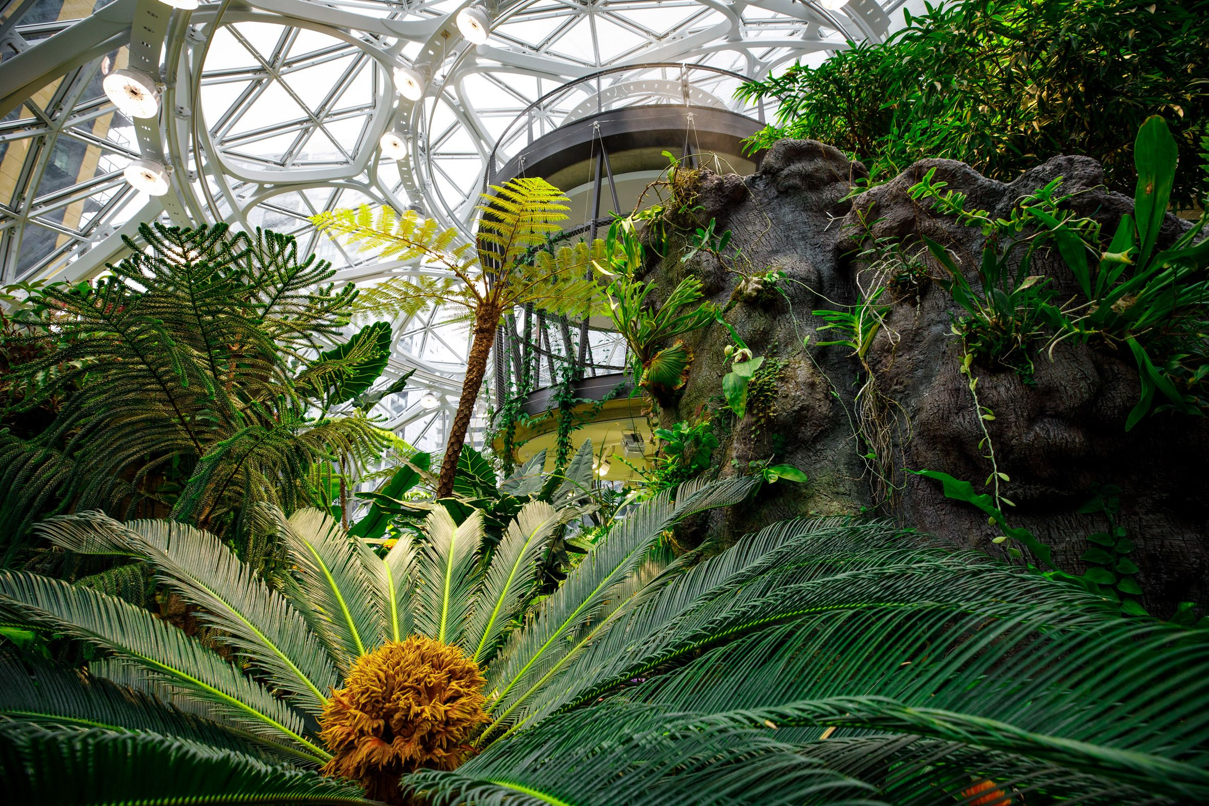 Plant Filled Spheres Open At Amazon Headquarters In Seattle
