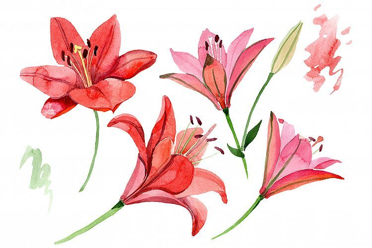 Red Lily Flower Watercolor Png 301370 Illustrations Design Bundles Red Lily Flower Watercolor Flowers Flower Drawing