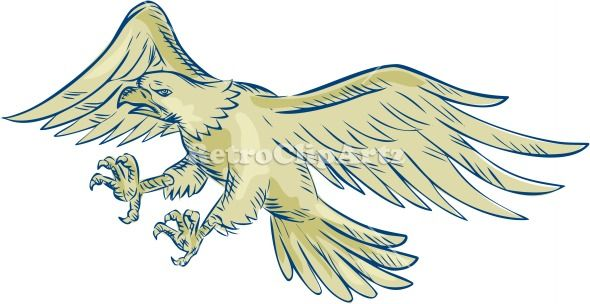 Bald Eagle Swooping Etching Vector Stock Illustration