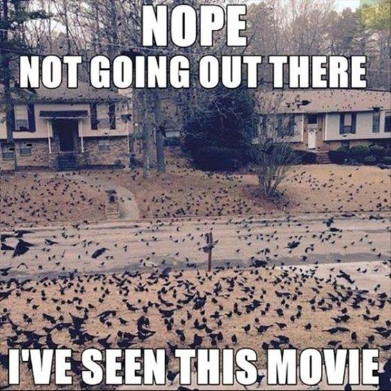 I've Seen This Movie #Best-Funny-Pictures, #Crazy-Funny-Pictures, #Extremely-Funny, #Free-Funny-Pictures, #Funny-Images, #Movie, #Seen