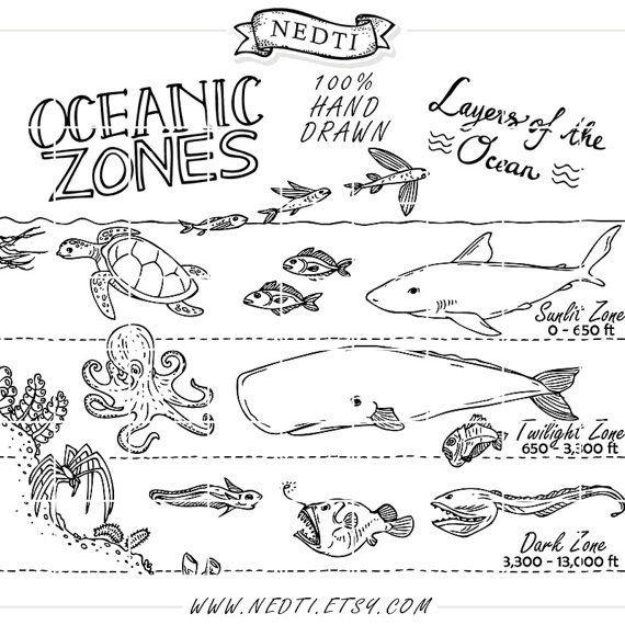 Oceanic Zones Educational Clipart, Earth Science, Hand