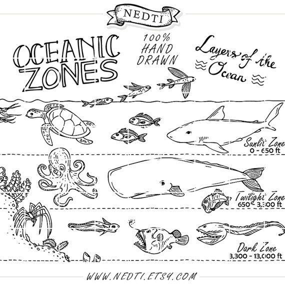 Oceanic Zones Educational Clipart Earth Science Hand Drawn Vector Illustration Drawing Vectors Teachers Design Kit Ocean Layers Earth Science Ocean Zones