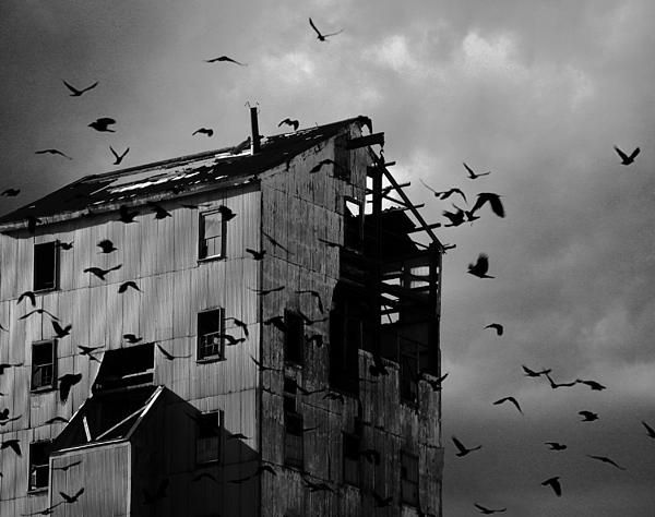 Items similar to broken industry print industrial photograph metallic ravens urban goth the ravens rage against the past on etsy