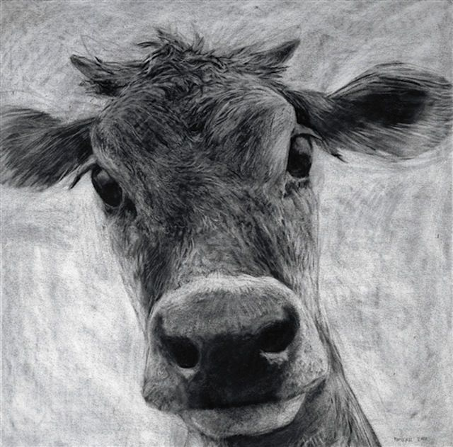 Jersey Cow portrait by Nick Romeril