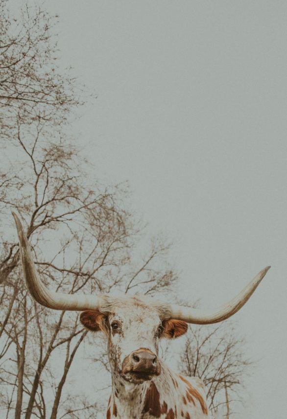 Western Gallery - Alex Callaghan Photography