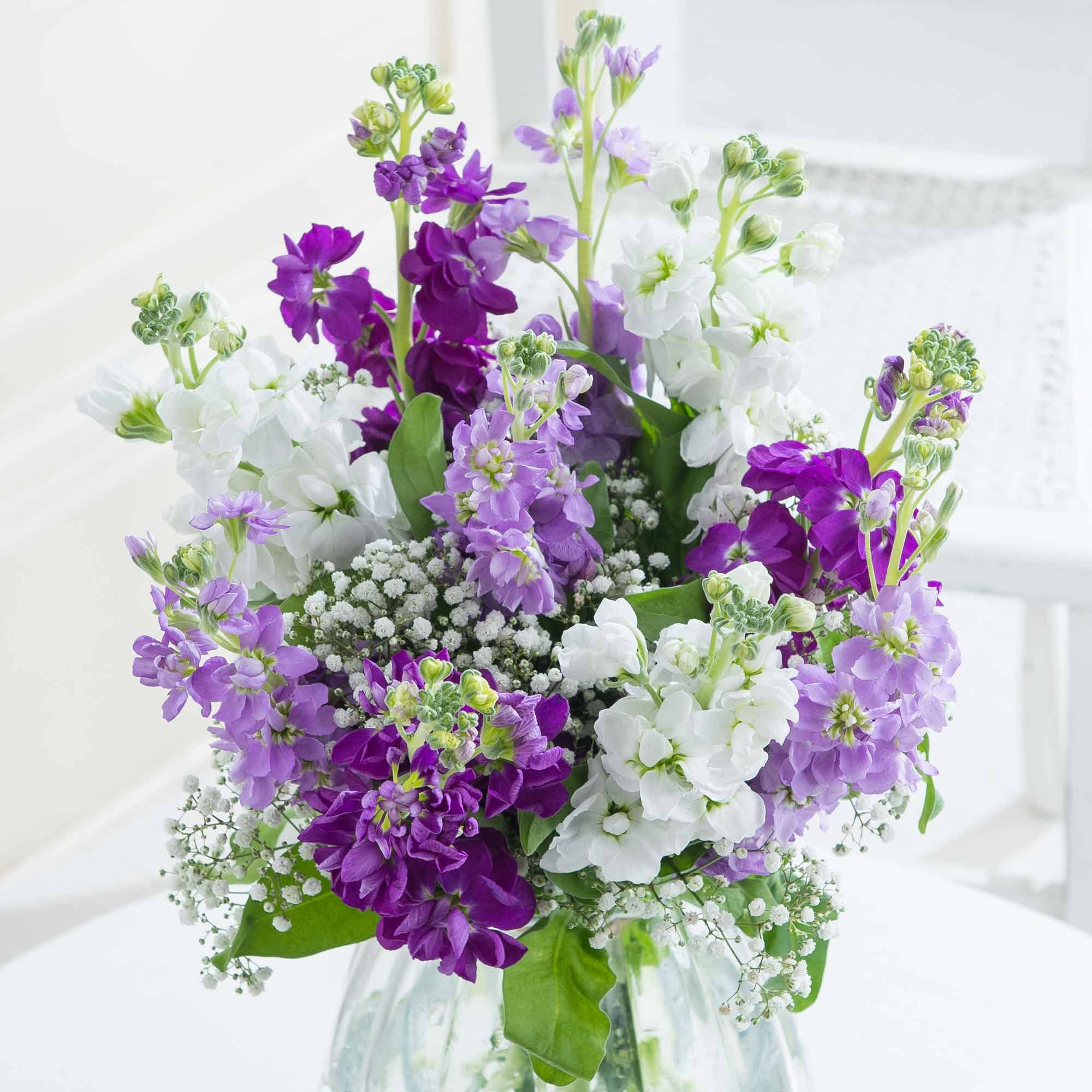 Pretty In Bloom - A gorgeous arrangement that smells heavenly too, this mix of stunning stocks in lilac, purple and white tones is sure to delight your loved one.