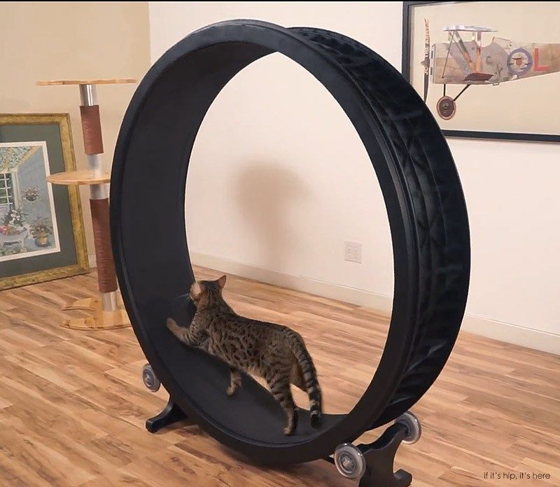 Faster Pussycat Run Run Now There S An Exercise Wheel For Cats