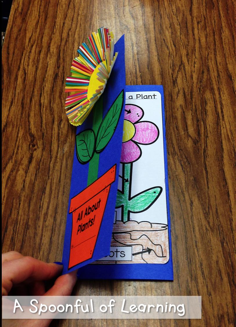 Plants Teaching Catholic Schools