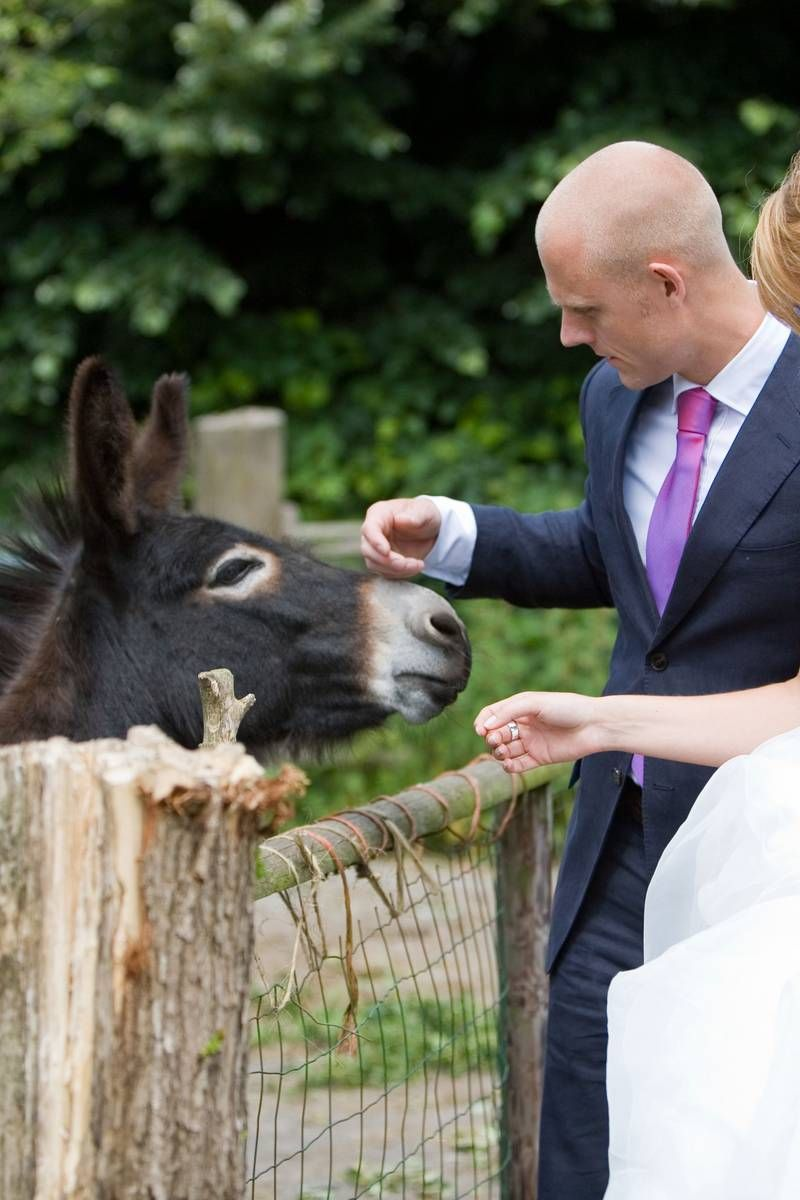 Having a donkey at your wedding is the new thing! They make great ice-breakers for conversation and can distribute beverages too!