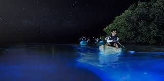 http://www.mnn.com/lifestyle/eco-tourism/blogs/facts-about-vieques-bioluminescent-mosquito-bay
