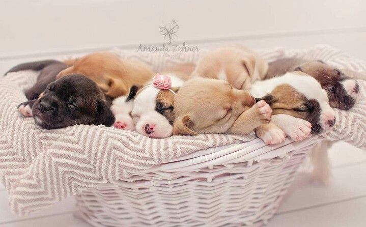 Puppy Photography Photos By Amanda Zahner Photography Newborn